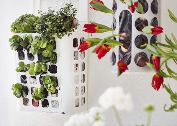 A plastic bag dispenser holding plants.