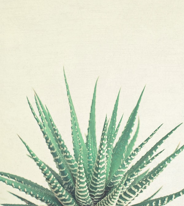 A print of a prickly plant.