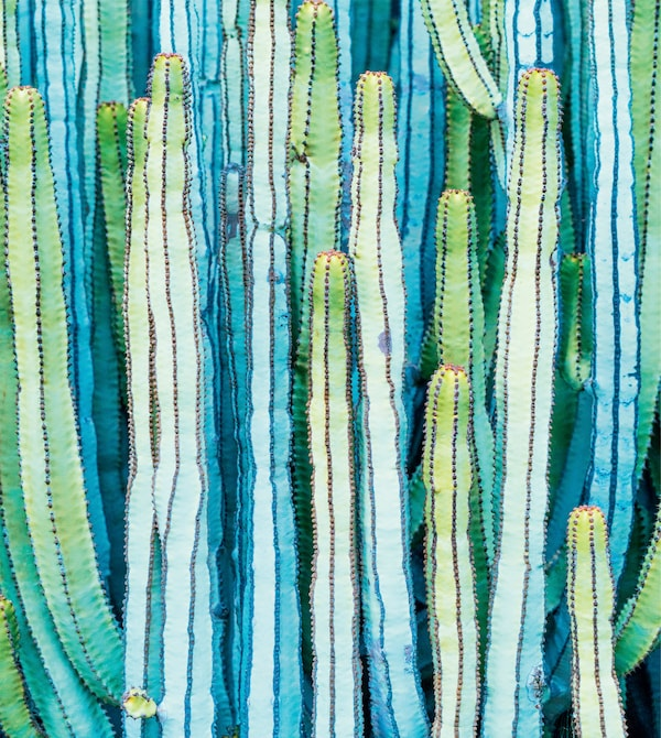 A print of tall cacti in green and blue.