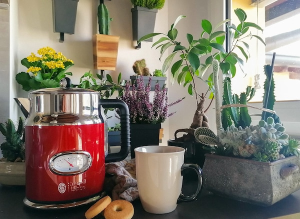 A red kettle, an off-white mug, and multiple pot plants are situated on a kitchen countertop.