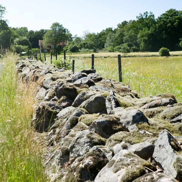 A rock wall in a meadow with forests in the background located in Småland, Sweden.