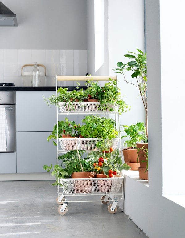 A rolling utility cart as a flexible veggie patch.