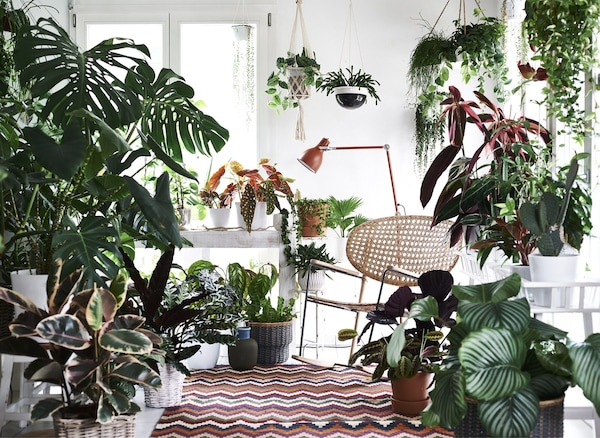 A rug, lamp and chair, framed by lots of plants.