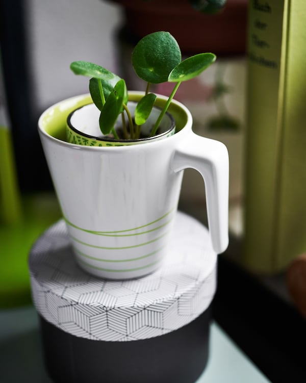 A small plant potted in a white mug.