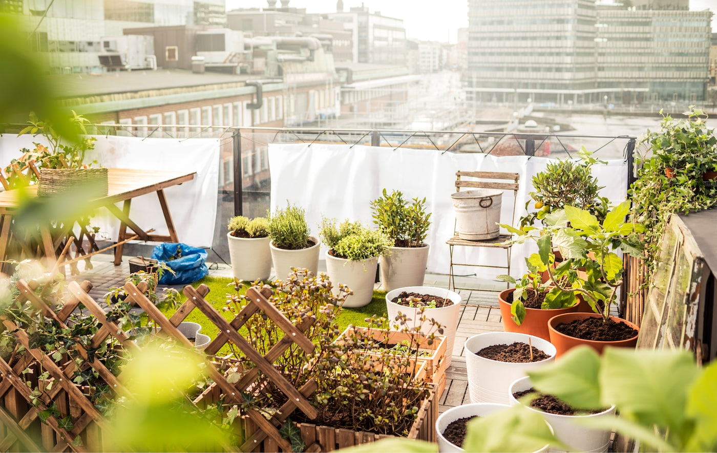 A small rooftop garden is set up with a patch of grass,