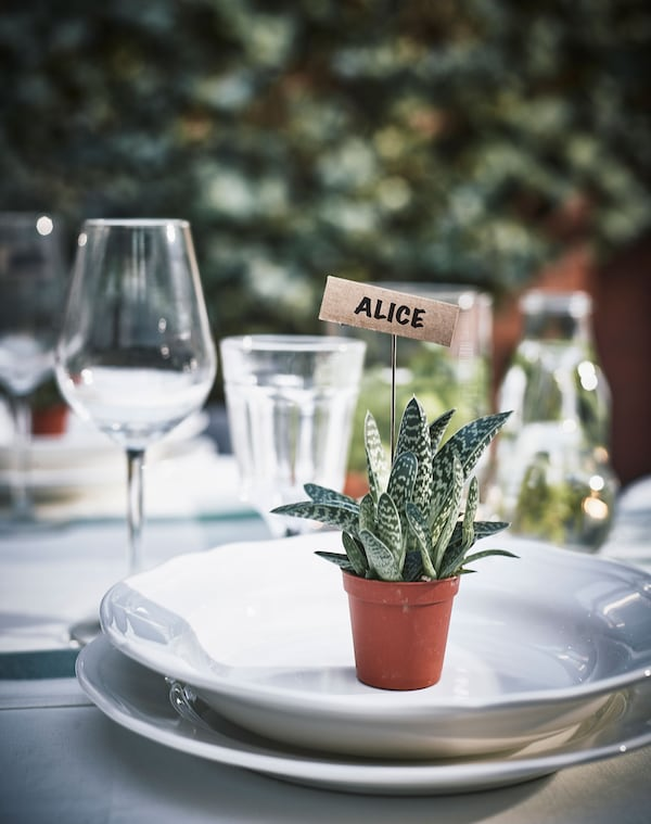 A small succulent plant with a name card  sits on a place setting.