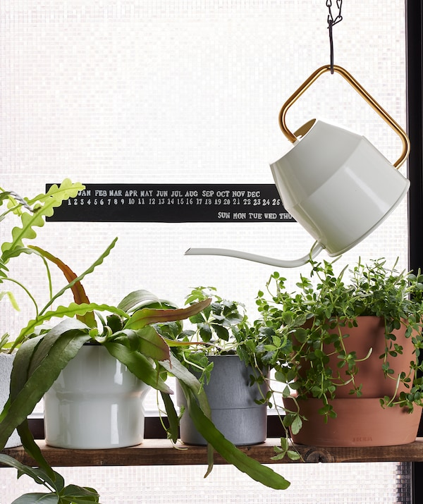 A small watering can hangs next to a shelf of pot plants.