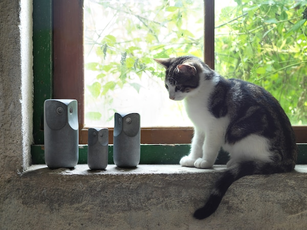 A small white and gray cat sits on a windowsill and looks at three gray TONAD decorative owls made of concrete.