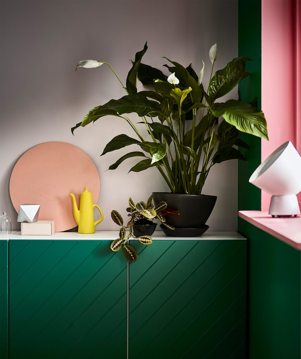 A SPATHIPYLLUM potted plant peace lily placed in a corner on top of a green cabinet.