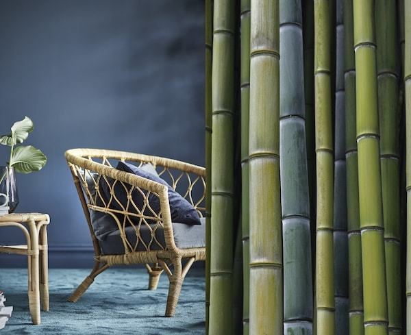 A split photo showing bamboo stalks and a finished armchair with a bamboo weaved frame.