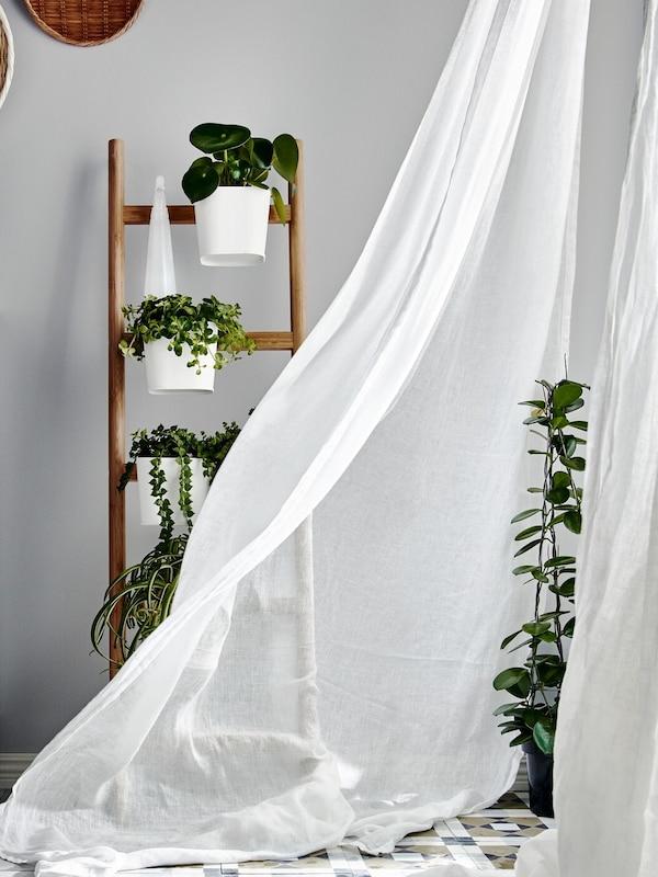 A szoba sarkában a földig érő ablakokat áttetsző, a szél által lengetett függöny takarja, a függöny előtt növények.