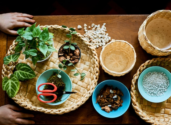 A table top covered with baskets of stones and natural materials and plants.
