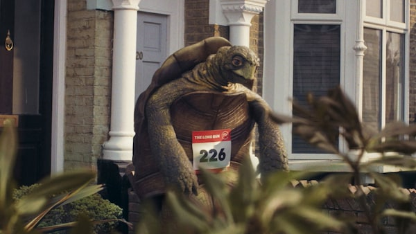 A tortoise wearing a racing number.
