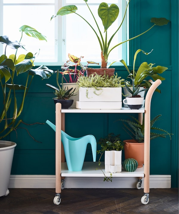 A trolley with wheels covered with indoor plant growing accessories and plants.