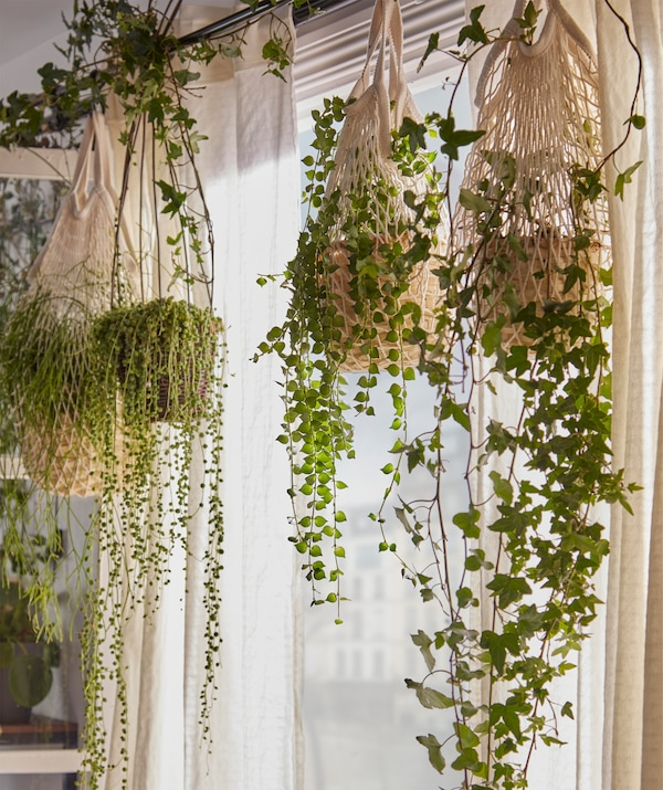 A veil of draping plants set in KUNGSFORS net bags and hanging side by side from a curtain rod inside a window.