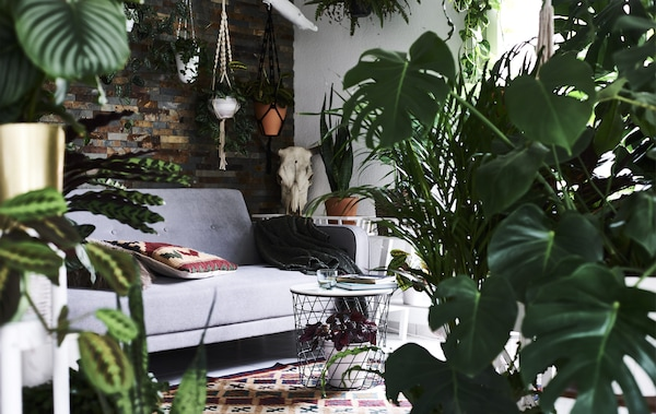 A view through lots of plants to a living room with gray sofa and patterned rug.