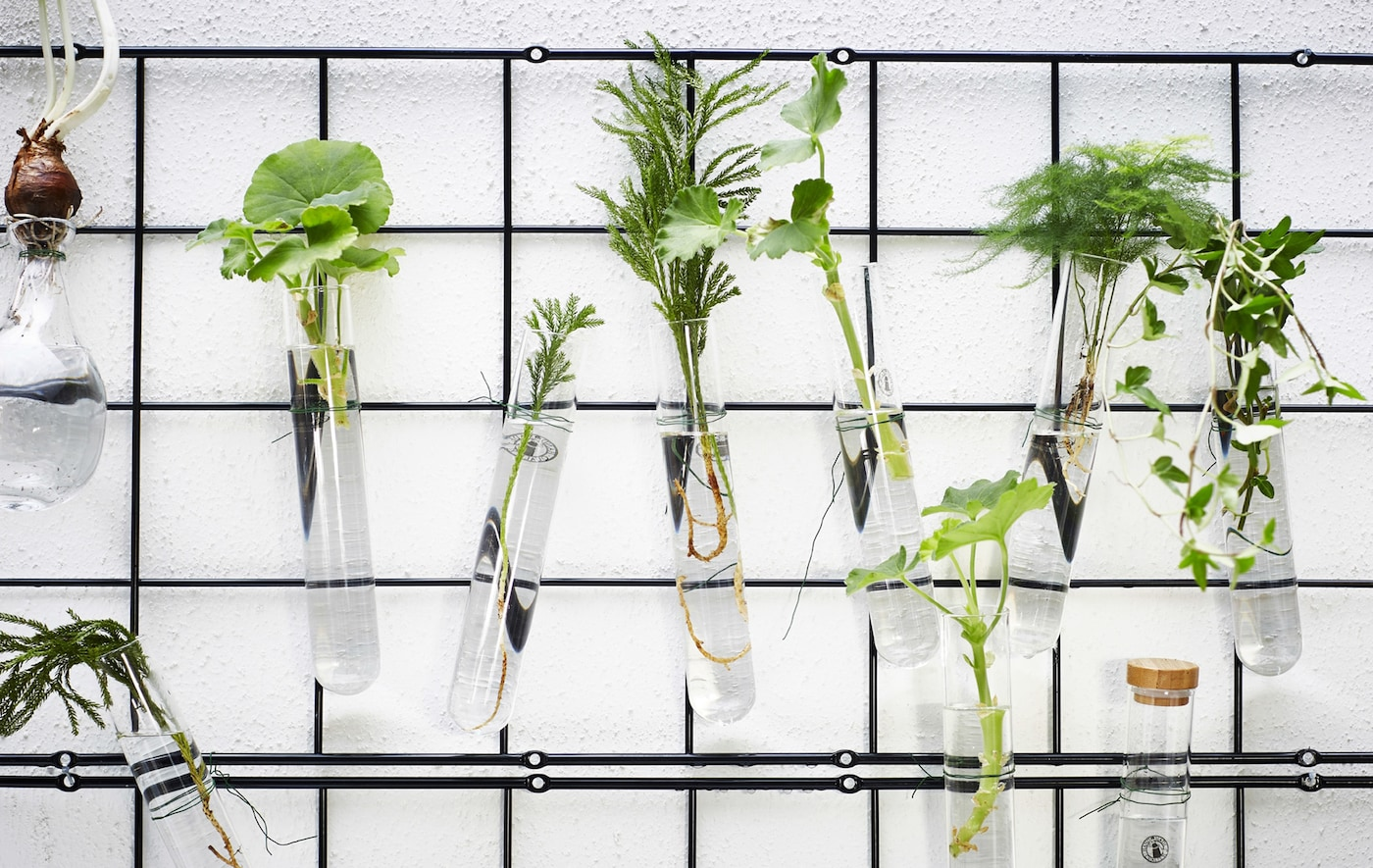 A wall rack with glass tubes containing water and plants.