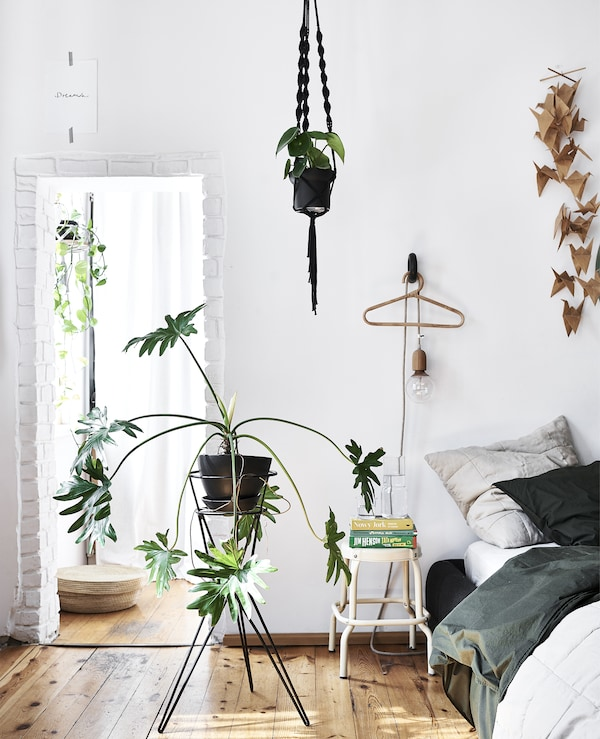 A white bedroom with wooden floor and large plant on a stand.