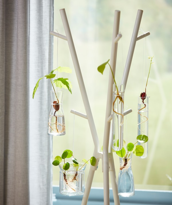 A white EKRAR hat and coat hanger made from steel is being used for hanging baby plants in the sunlight.