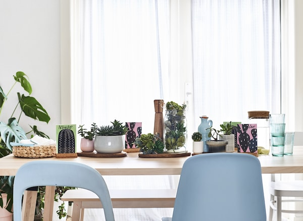 A white interior with a pale wood dining table filled with succulents.