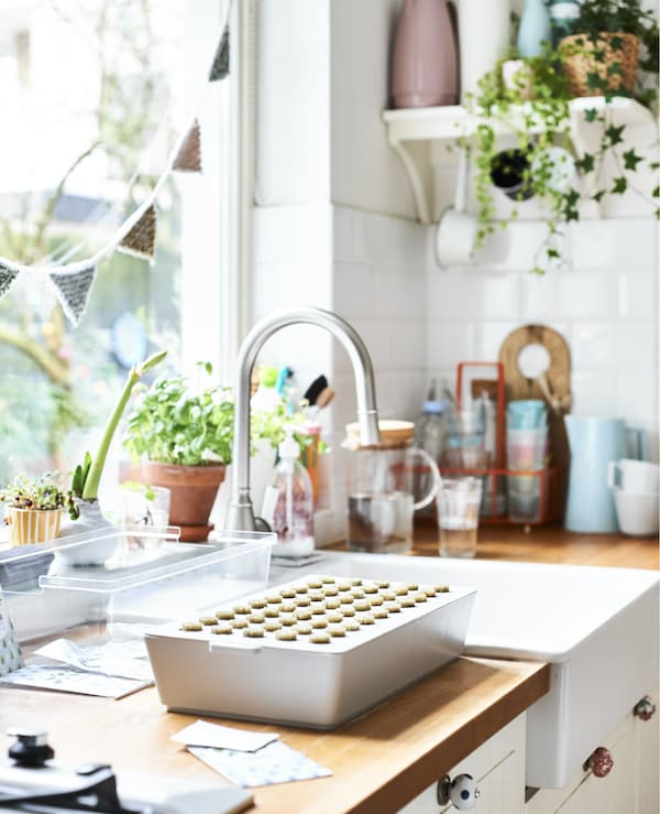 A white kitchen sink and wooden worktop with sprout box and potted plants.