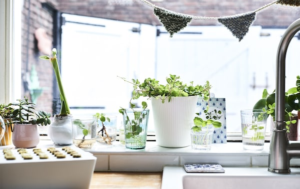 A white kitchen windowsill lined with potted plants, cuttings and a sprout box.