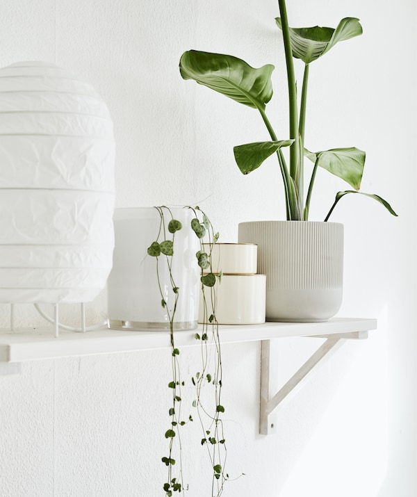 A white lamp, pot plants and ornaments on a white wall-mounted shelf.