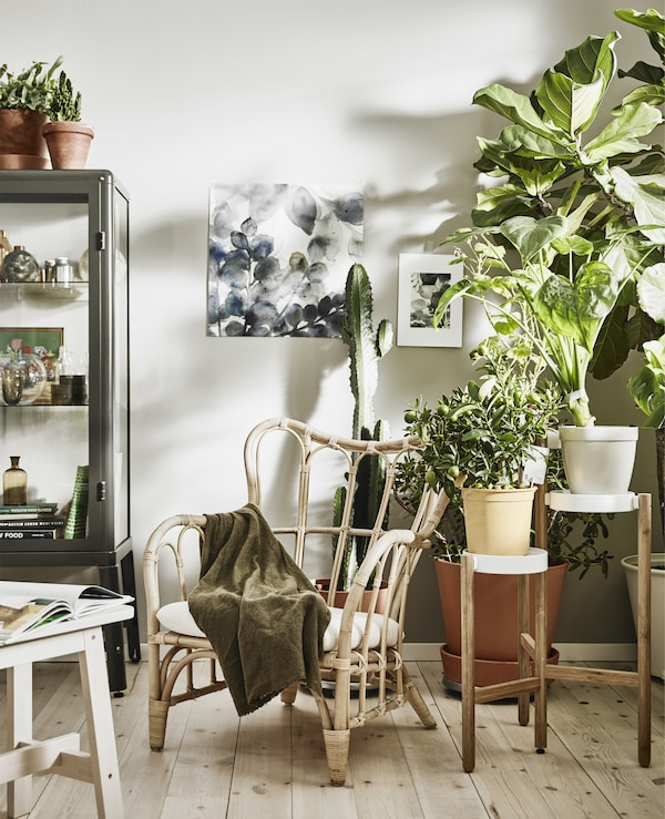 A white living room with lots of pot plants and a wicker chair.