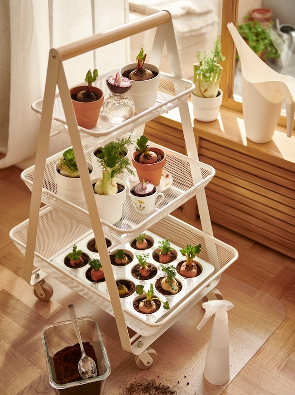 A white RISATORP trolley standing by a window on a KOLON floor protector, its baskets filled with planted vegetable cuttings.