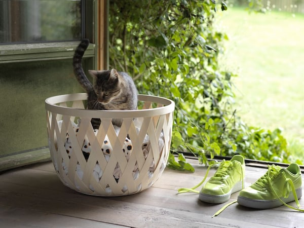 A white TJILLEVIPS basket with a kitten playing inside sitting on the floor near an outdoor space.