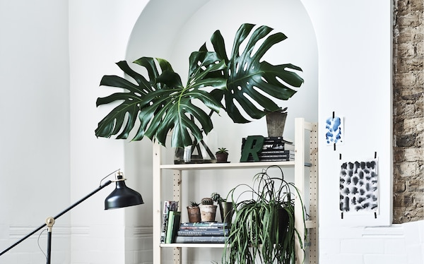 A white wall with shelving and artificial plants.