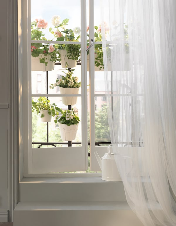 A window balcony with plants hanging on the rails of the balcony