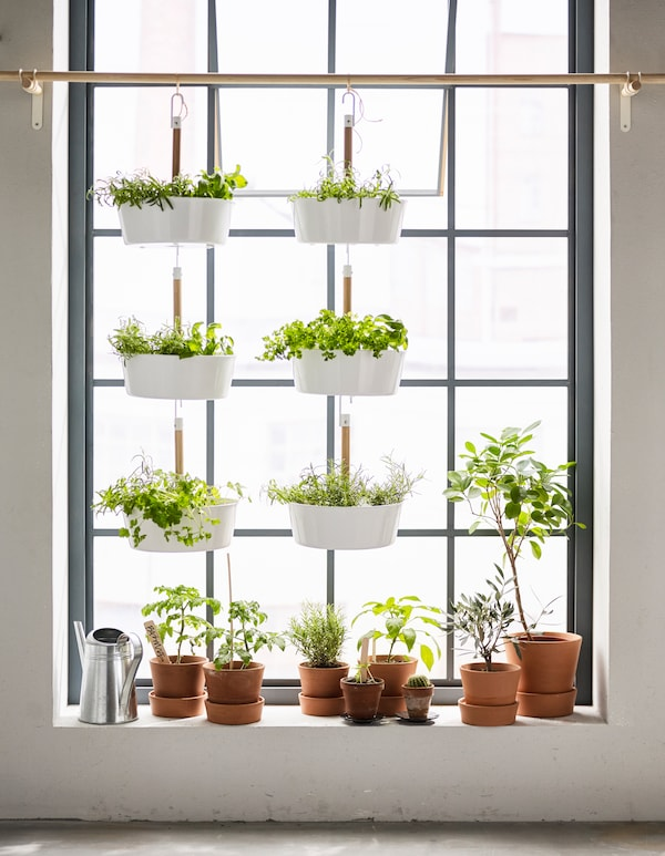 A windowsill with hanging pots.