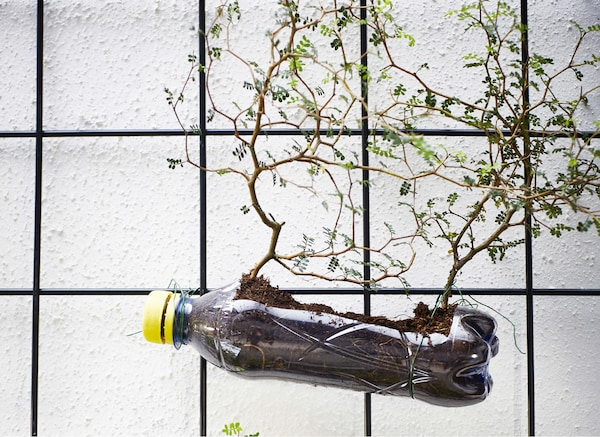 A wire trellis with plastic bottle planter.