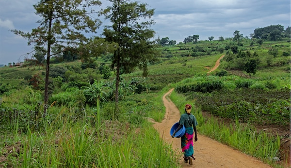 A woman with a basket walking down a long path in the middle of a green landscape in Uganda.