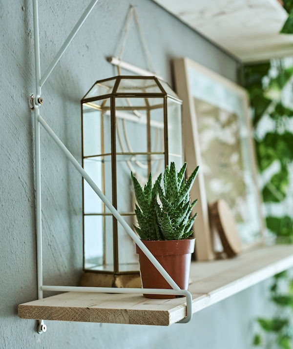 A wood shelf with white metal shelf bracket used to display an aloe vera plant and glass and metal-framed hexagonal dome.