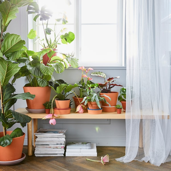 A wooden bench with books below it holding lots of different-sized lush green plants in terracotta pots, in front of a window.