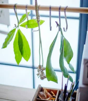 A wooden pole with silver metal hooks hanging off it with green leaves hang from the hooks