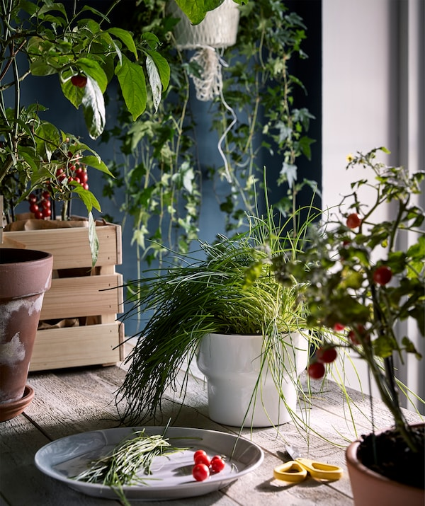 A worktop of rough wood in a kitchen-like environment with plants all-round and a plate with a fresh harvest of greens.