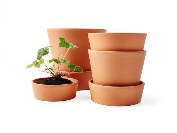 Kültéri kaspók és növények.