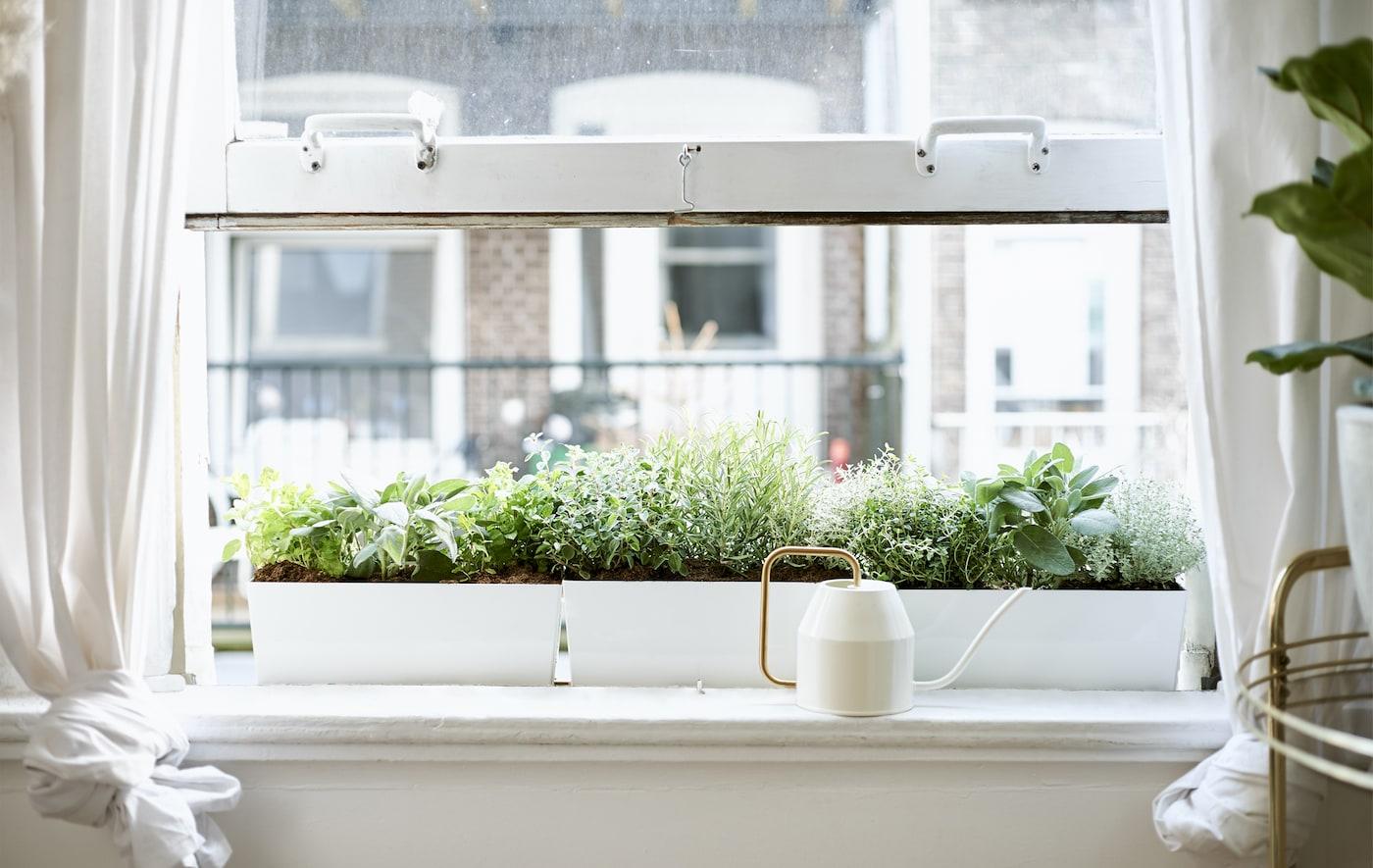 Åbent vindue med en elfenbens- og guldfarvet vandkande i en hvid vindueskarm foran altankasser fyldt med planter.