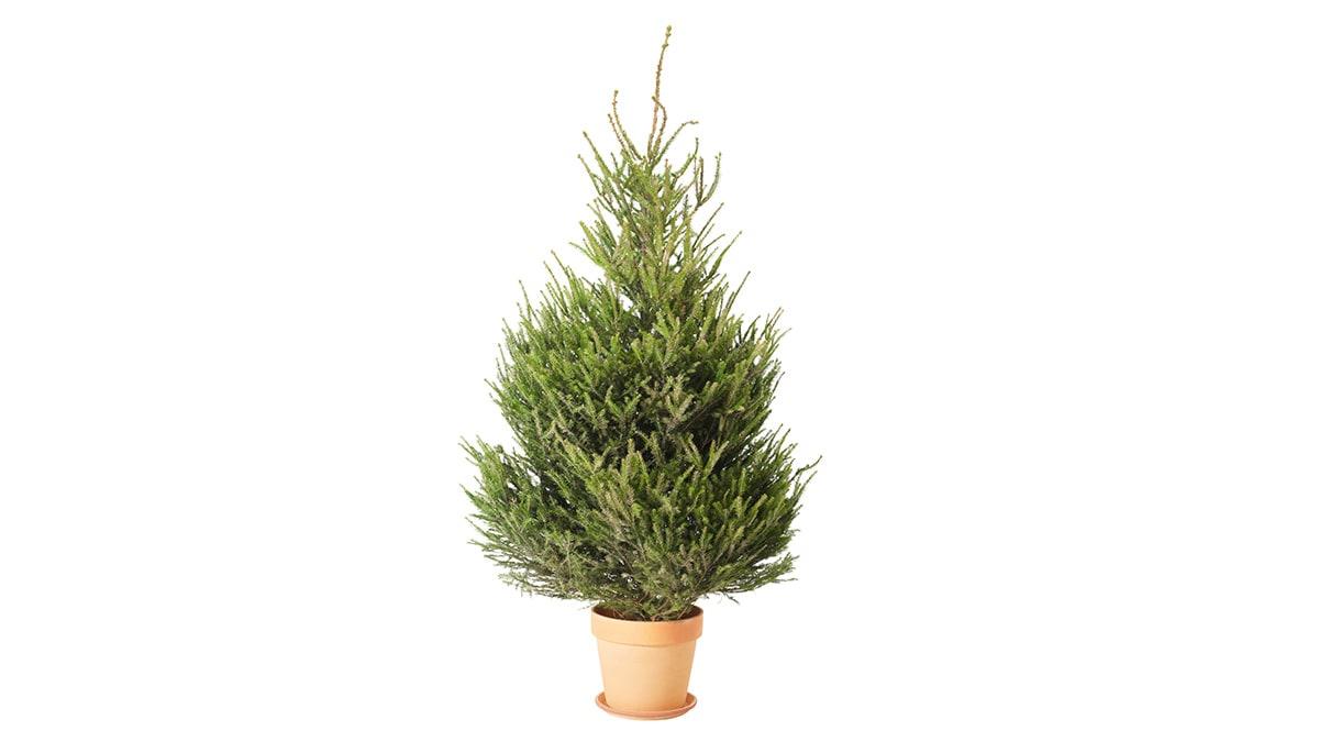 Ikea promozione alberi di natale