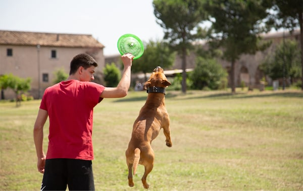 Alessandro and his dog playing with a frisbee in a park.