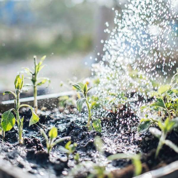 Als leidenschaftliche Gärtnerin fängt für Kasia Nachhaltigkeit bereits im eigenen Beet an.