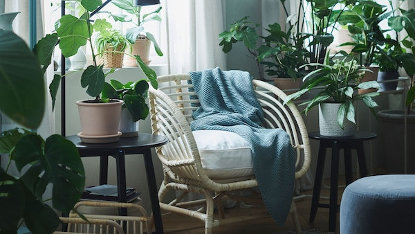 An armchair with a blue throw next to a window, surrounded by large plants.