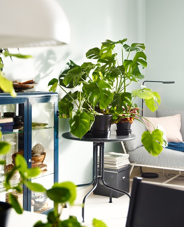 An IKEA LÄCKÖ gray table filled with green house plants in pots in a living room setting.