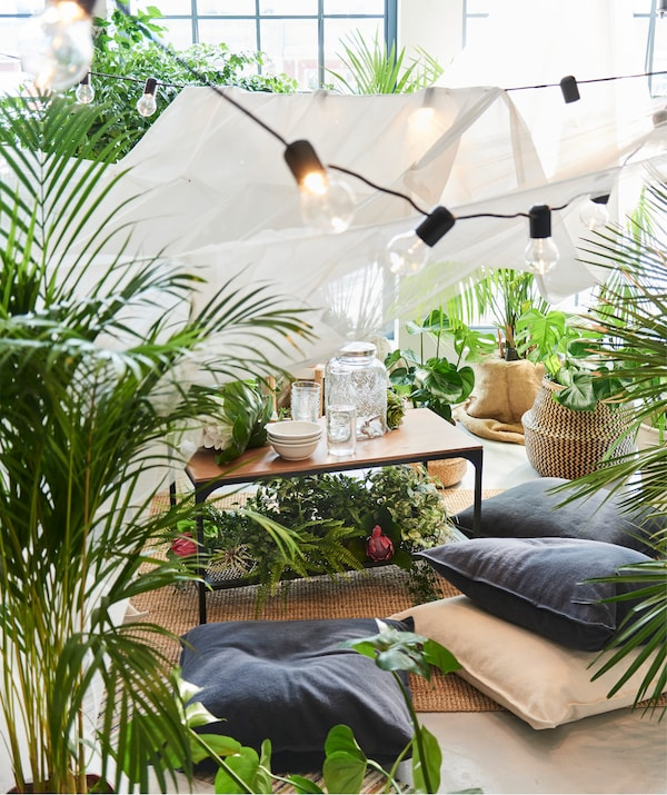 An indoor picnic in a living room with a coffee table, cushions on the floor, and plants filling out the room