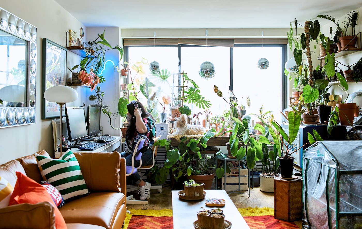 An open-plan living area with a plant display and workspace in front of a window.
