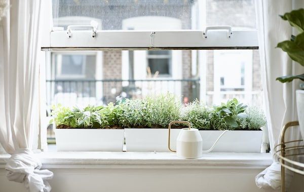 An open window with a cream and gold watering can on a white windowsill in front of a window box filled with plants.
