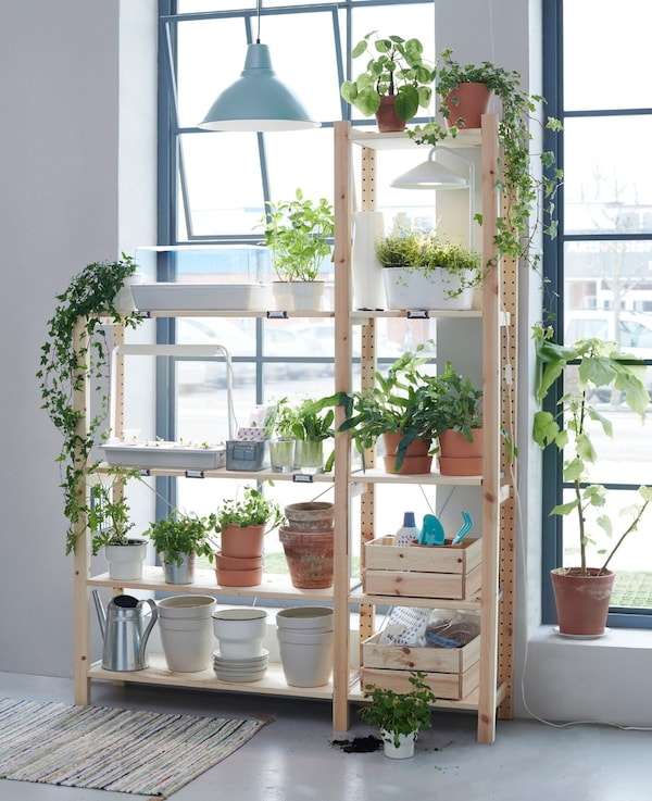 An open wooden shelving storage unit in front of window and covered in plants and plant accessories.
